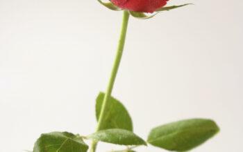 SEO For Florists Websites